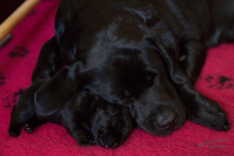 Pup Beike 1 weekje oud-18