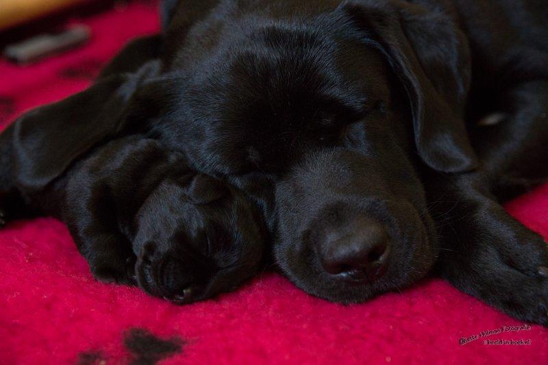 Pup Beike 1 weekje oud-20