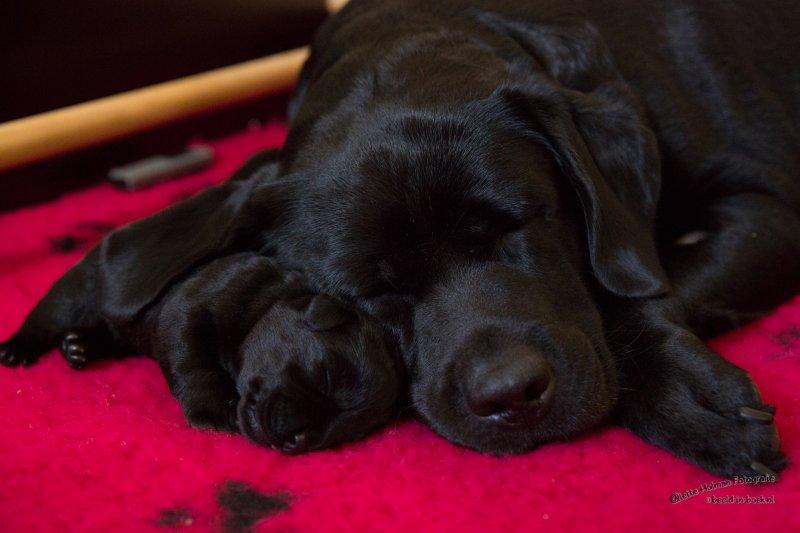 Pup Beike 1 weekje oud-21