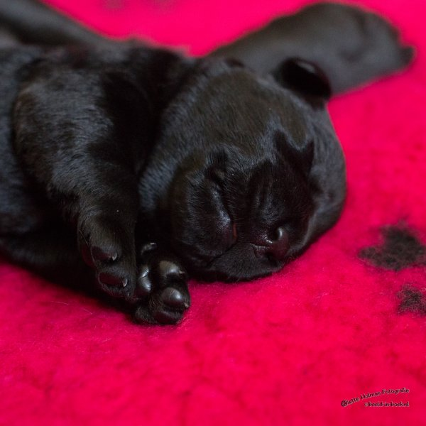 Pup Beike 1 weekje oud-28